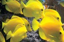 Baltimore-AquariumPCR