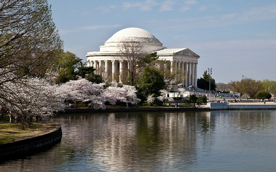 CHERRY-BLOSSOMS-at-the-TIDAL-BASIN